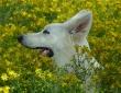 Noyée dans les fleurs où se cachent si bien ces fichus lapins... (18 mois)