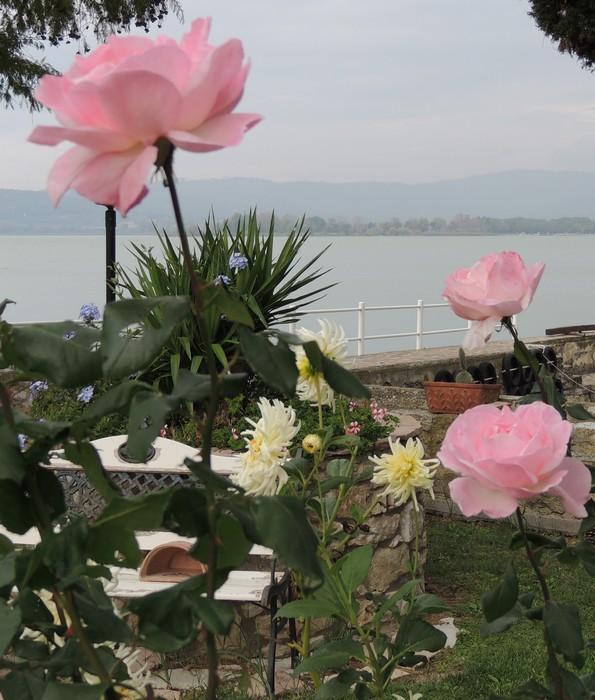 Belle floraison d automne dans notre jardin le blog de fabienne et jean wilmotte for Parterre de roses photos