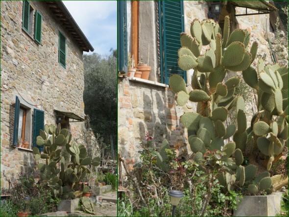 Les beaux cactus.