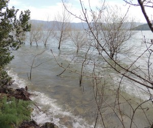 Au lungolago de l' Isola Maggiore, de nombreux arbres se retrouvent désormais dans les eaux du lac Trasimène   -   4 avril 2013.