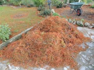 Les aiguilles de pin furent impitoyabelement regroupées en de funestes tas condamnés au bûcher...