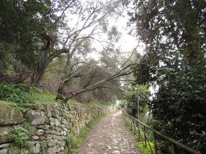 Chute d'une grosse branche d'un petit arbre dans la montée de la <strong>Via Tre Martiri</strong> (<em>notre rue</em>).