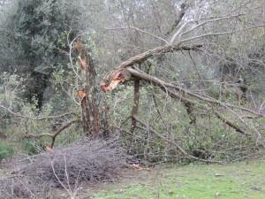 Une branche violemment arrachée.