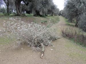 Une branche tombée au milieu du chemin.