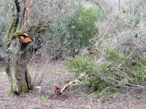 Et les désormais habituels arrachages de branches.
