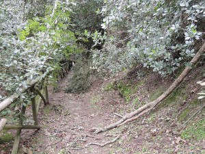 """Plus bas, toujours dans la """"strada di San Francesco"""", le passage est à nouveau encombré par des branches abattues."""