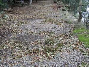 Un champ de bataille abandonné... innombrables débris de branchages... feuilles mortes...