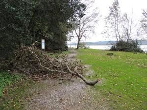 Branches renversées...
