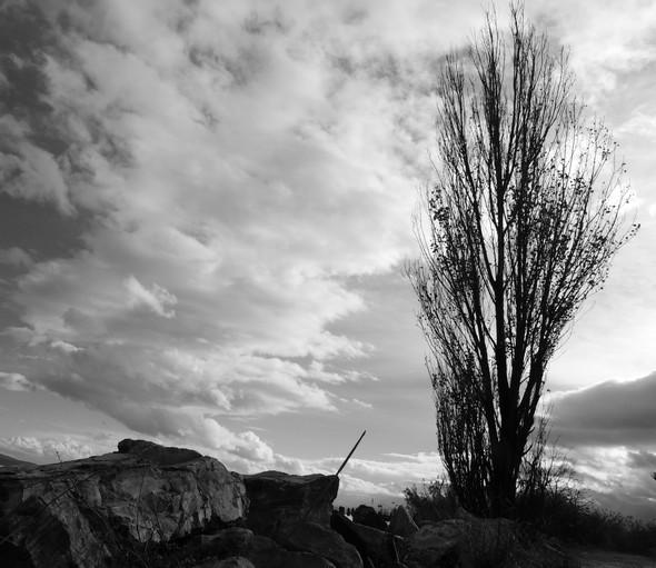 Ciel tourmenté, arbre impavide - Minaccioso cielo, albero stoico - Stormy sky, fearless tree