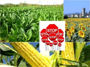 Suppression des cultures non autochtones de plantes requérant de grandes quantités d'eau.