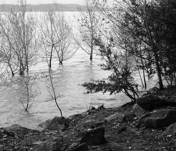 Au lungolago, le Trasimène recouvre les pieds de nombreux arbres et la petite plage de galets a disparu.
