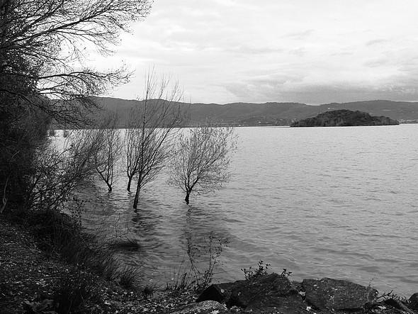 Au lungolago de l'Isola Maggiore, d'autres arbres plongés dans le Trasimène et vue sur l'Isola Minore.