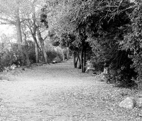 Une belle allée forestière termine le parcours vers l'esplanade de saint François.