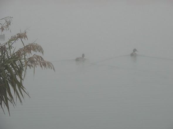 Comme à l'Isola Maggiore, pas de trafic nautique à part quelques canards.