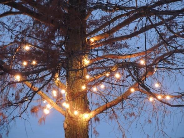 Embrasement - Illuminazione - Pin du Mississipi de notre jardin, Isola Maggiore.