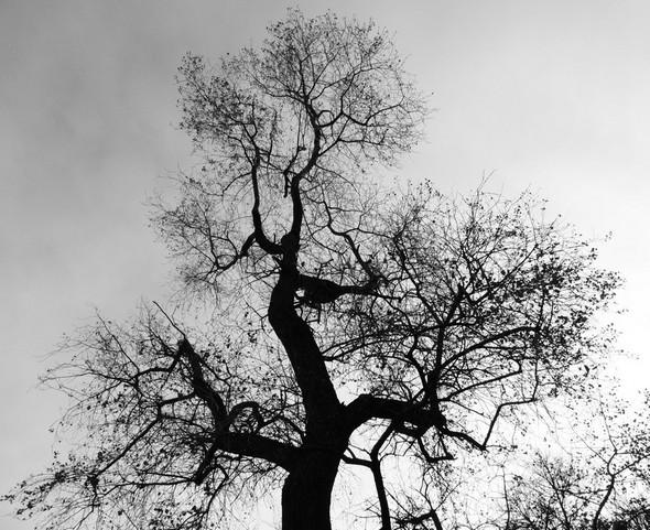 Le maître de la forêt   -   Padrone della foresta.  (lungolago, Isola Maggiore)