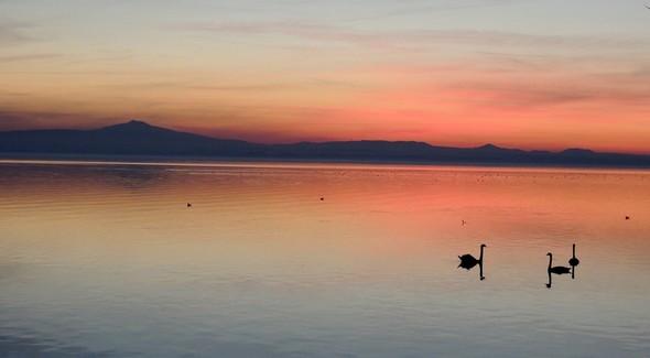 Silhouettes lointaines de deux cygnes sur le lac Trasimène, face à la rive de Borghetto - 18/12/2013.