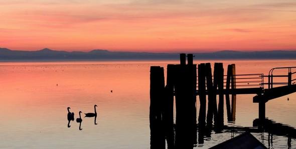 Trois cygnes au crépuscule, à côté de l'extrémité du pontile de l'Isola Maggiore - 18/12/2013,   18:14