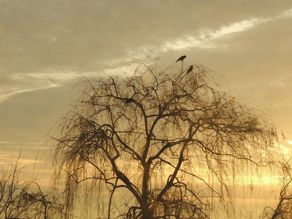 Une vue du crépuscule guetté par deux oiseaux noirs (sorte de corneille ?) - 7/01/2014, 17:45