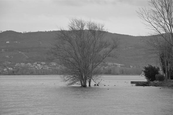 Bel albero isolato nel lago Trasimeno, vicino alla punta nord di Isola Maggiore - © Umberto Chiappafreddo, 20 febbraio 2014.