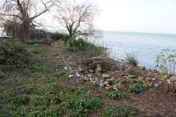 Fin janvier 2012 : rivage caillouteux et bien délimité.
