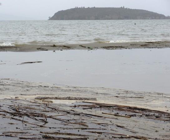 """Les nombreux débris rejetés par le Trasimène, l'envahissement par l'eau, le petit """"rempart"""" sablonneux et, au fond, l'Isola Maggiore."""