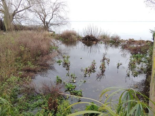 Fin janvier 2014 : la rive du jardin est bien estompée et prend des allures marécageuses.