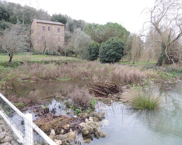 Fin janvier 2014 : la première partie du jardin presque totalement sous eau.