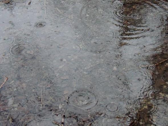 Et une pluie heureusement plus sereine continue à tomber et à faire des ronds dans l'eau.