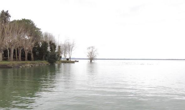 Isolement dans l'eau du bel arbre de la pointe nord de l'Isola Maggiore - 3/02/2014