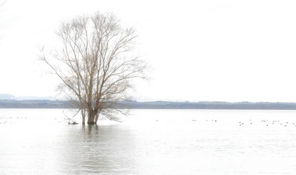 Ce bel arbre encerclé par les eaux symbolise sans peine la plénitude du lac Trasimène.