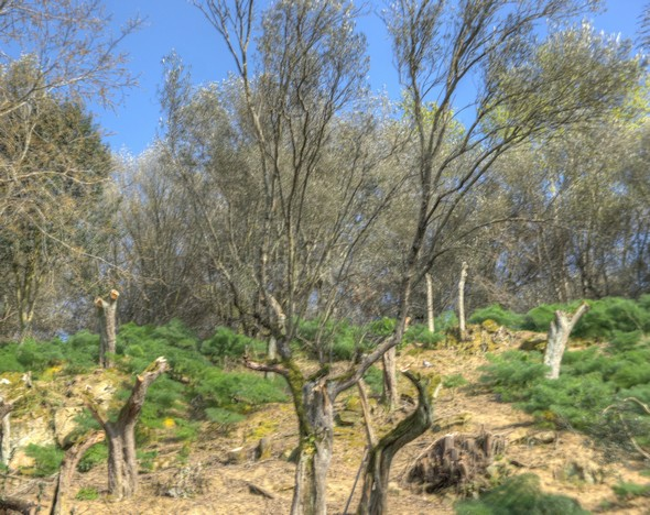 Les oliviers qui surplombent cette maison viennent d'être taillés, laissant un flanc de colline fort dénudé.