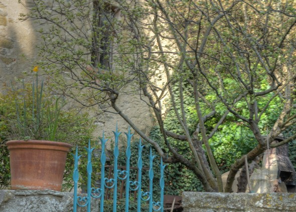 Le petit jardinet de cette même maison   -   La via Guglielmi est d'ailleurs caractérisée par ces émergences entre certaines maisons de jardins aux allures plutôt sauvages.
