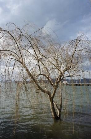 Hé oui, ici aussi des arbres se sont retrouvés isolés dans le lac !