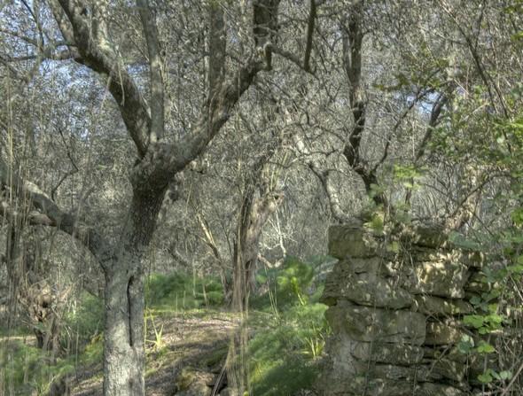 Vestiges d'antan dans l'oliveraie.