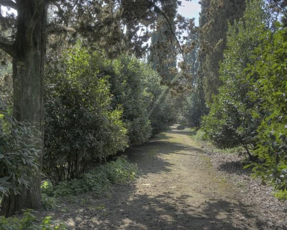 La viale Marchesa Isabella, encadrée de majestueux pins,  repart vers le sud, en direction de l'entrée principale de la Villa Guglielmi