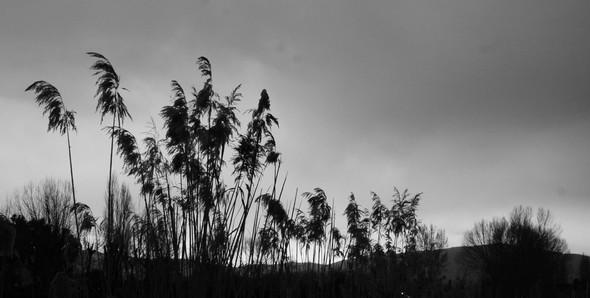 Courage, le soleil est en embuscade derrière la grisaille de ces derniers jours...!