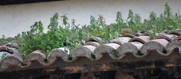 Mariage du toit et de la Nature...