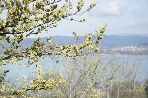 A mi-chemin de la strada di San Salvatore, vue sur Tuoro-sul-Trasimeno.