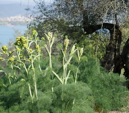 A certains endroits, c'est déjà pratiquement le cas (dans le coin gauche, le lac Trasimène et Tuoro sul Trasimeno).