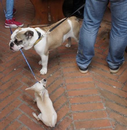 """Une """"solution canine"""" assez drastique !"""