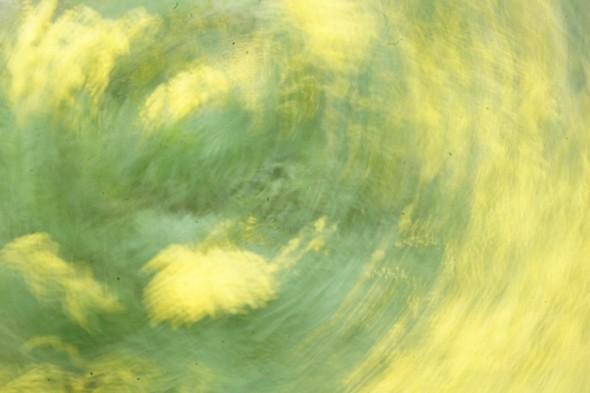 Citrons verts.