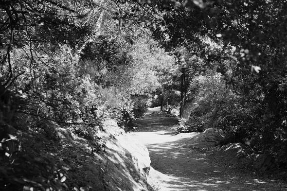 Puis, à peu près à mi-chemine, le chemin se rétrécit et métamorphose en sentier...