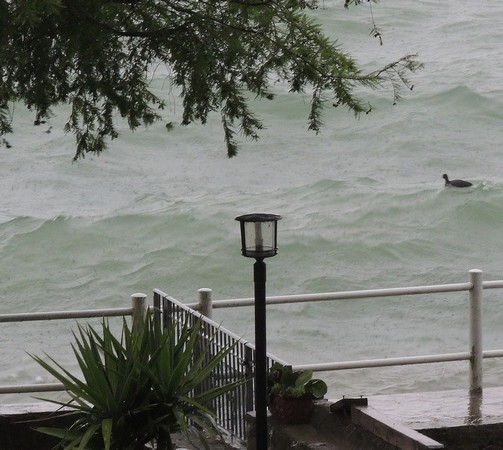 Une poule d'eau navigue tranquillement sur le Trasimène plutôt agité...