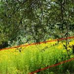 Analyse par l'image de la composition de la photo précédente (couleurs ravivées)