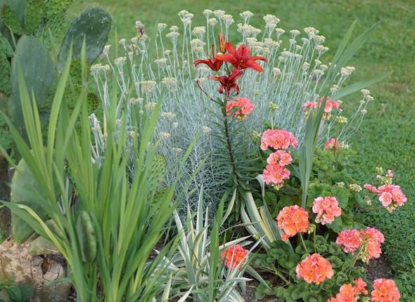Rouge et vert - Composition d'un parterre de Fabienne dans notre jardin à l'Isola Maggiore,  06/06/2014.