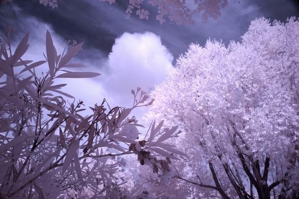Magie végétale : rencontre du Ciel et de la Terre...  -  Rive du Trasimène, à Tuoro,  14/07/2014,