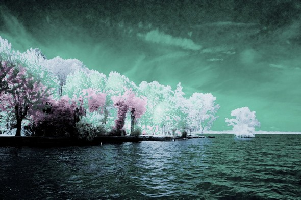 Pointe nord de l'Isola Maggiore avec, à l'extrême droite, les arbres immegés cette année dans le lac Trasimène.