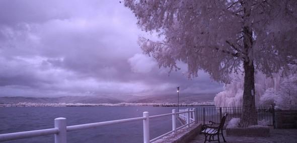 Vue sur le lac Trasimène, en direction de Tuoro, au départ de notre jardin à l' Isola Maggiore.
