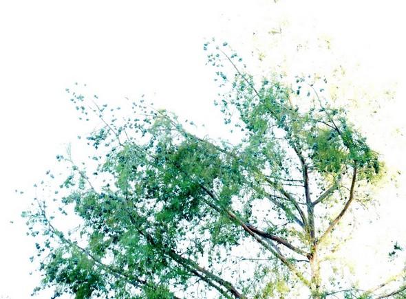 Soleil et cimes vertes.